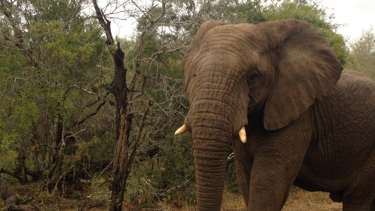 Hundreds Of Elephants Mysteriously Found Dead In Botswana