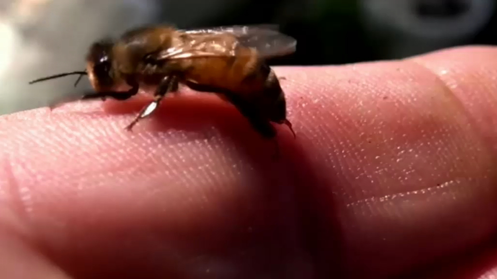 Breakthrough for people allergic to bee stings