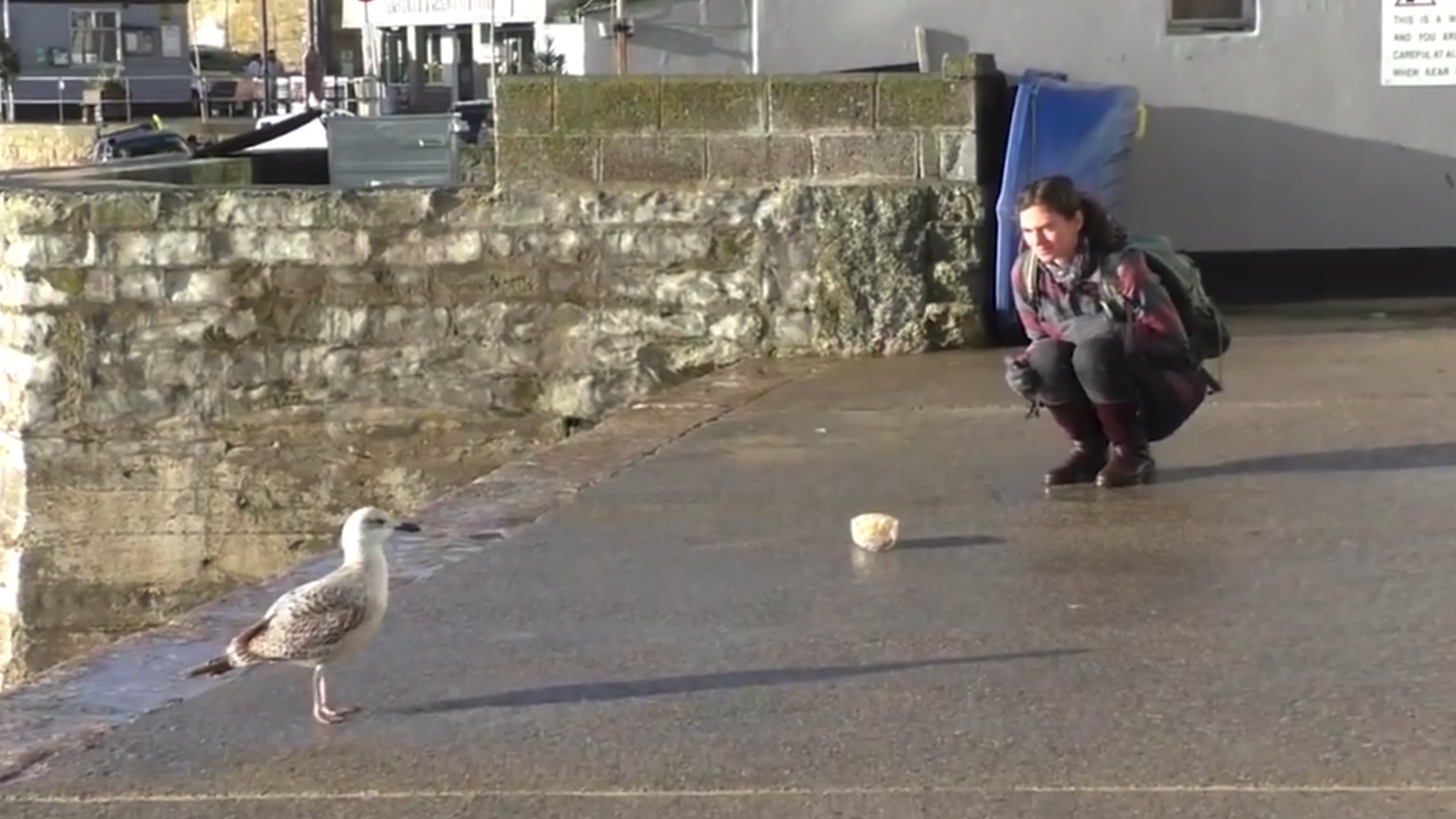 University tests theory seagulls don't pinch food when you stare at them