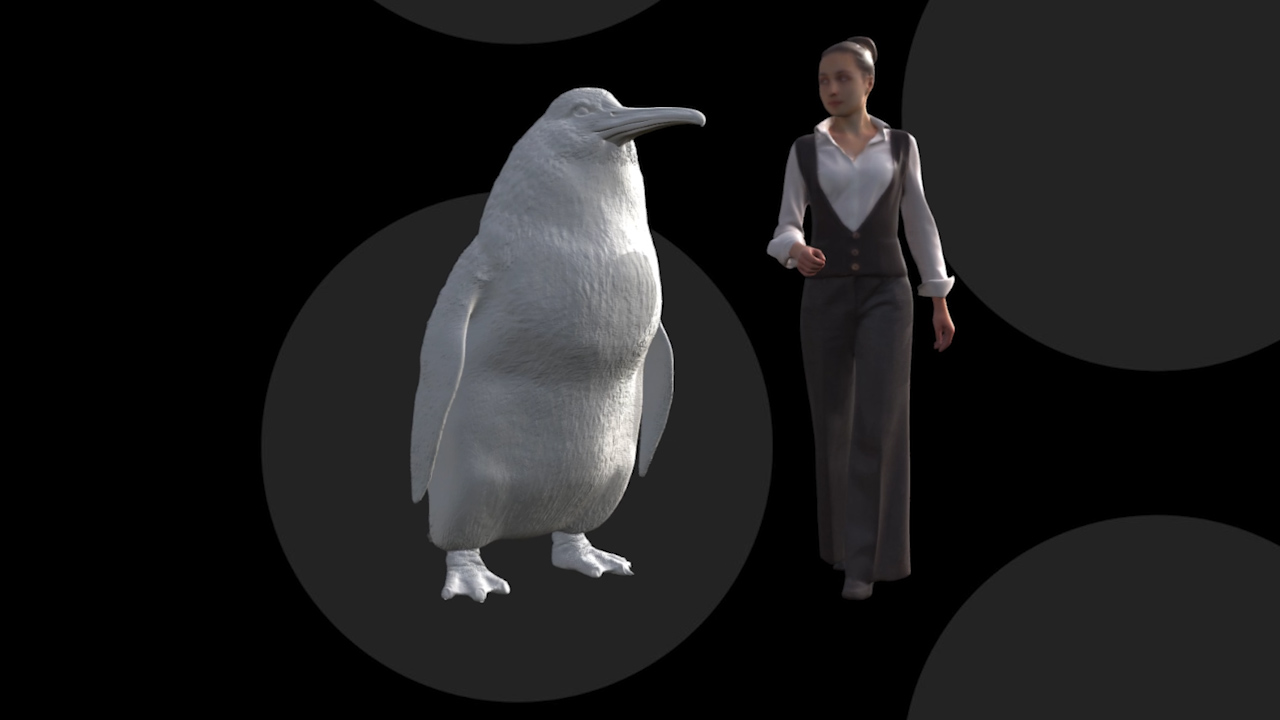 Human-Sized Penguin Fossils Uncovered in New Zealand