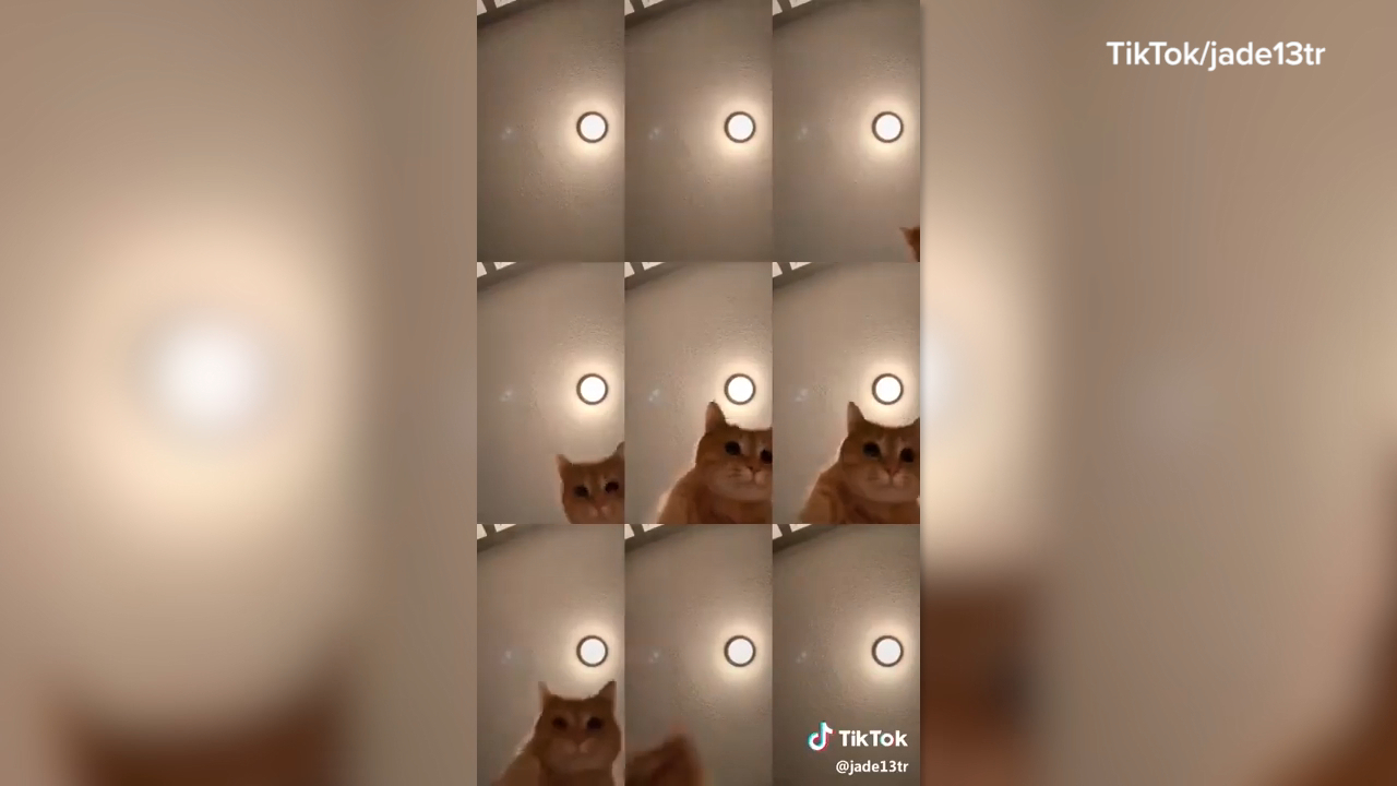 Ginger cat identified as star of social media hit video