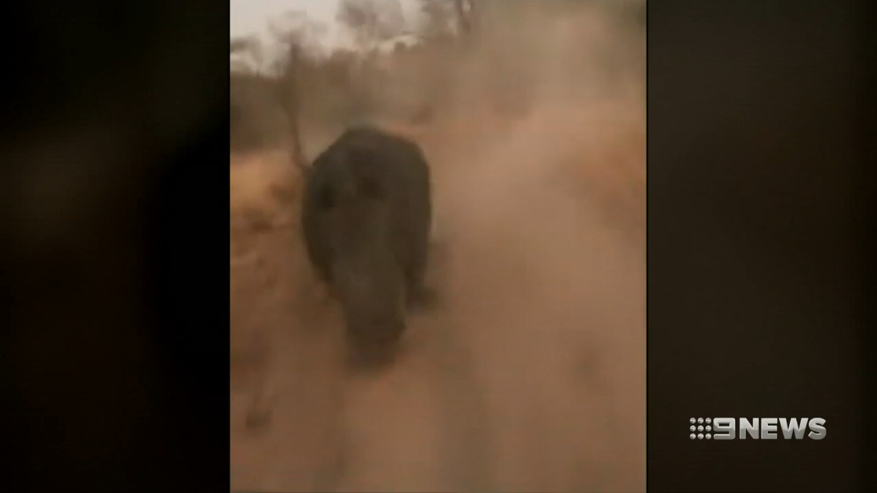 African safari tour turns to high speed chase