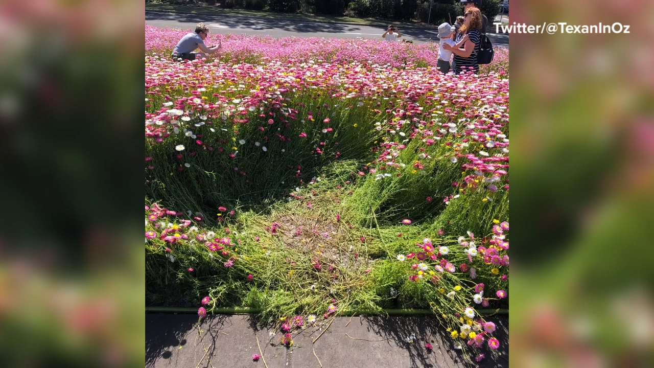 Spring Botanic Gardens display trampled by tourists' 'selfish selfies'