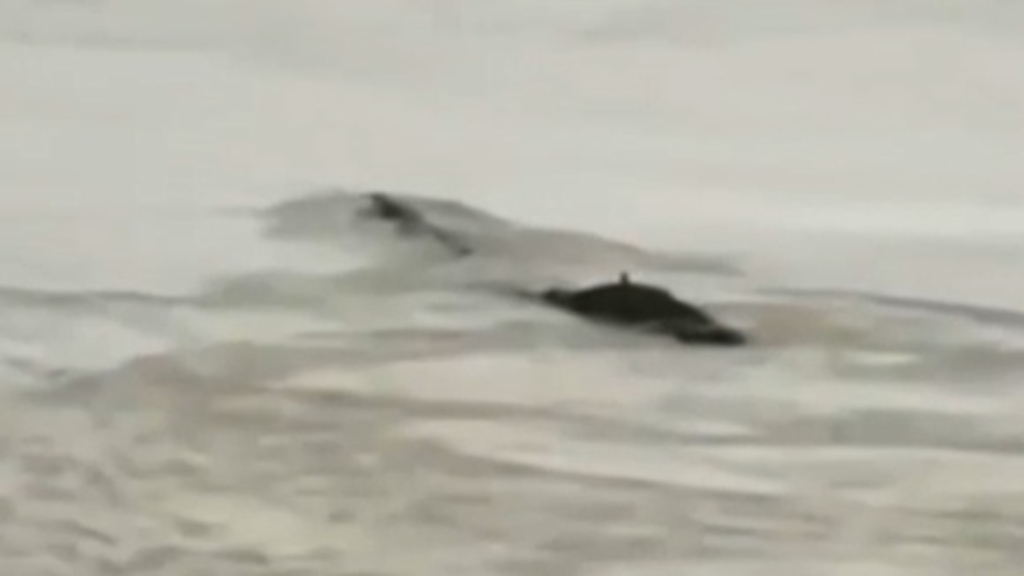 'Water Monster' spotted in Chinese river