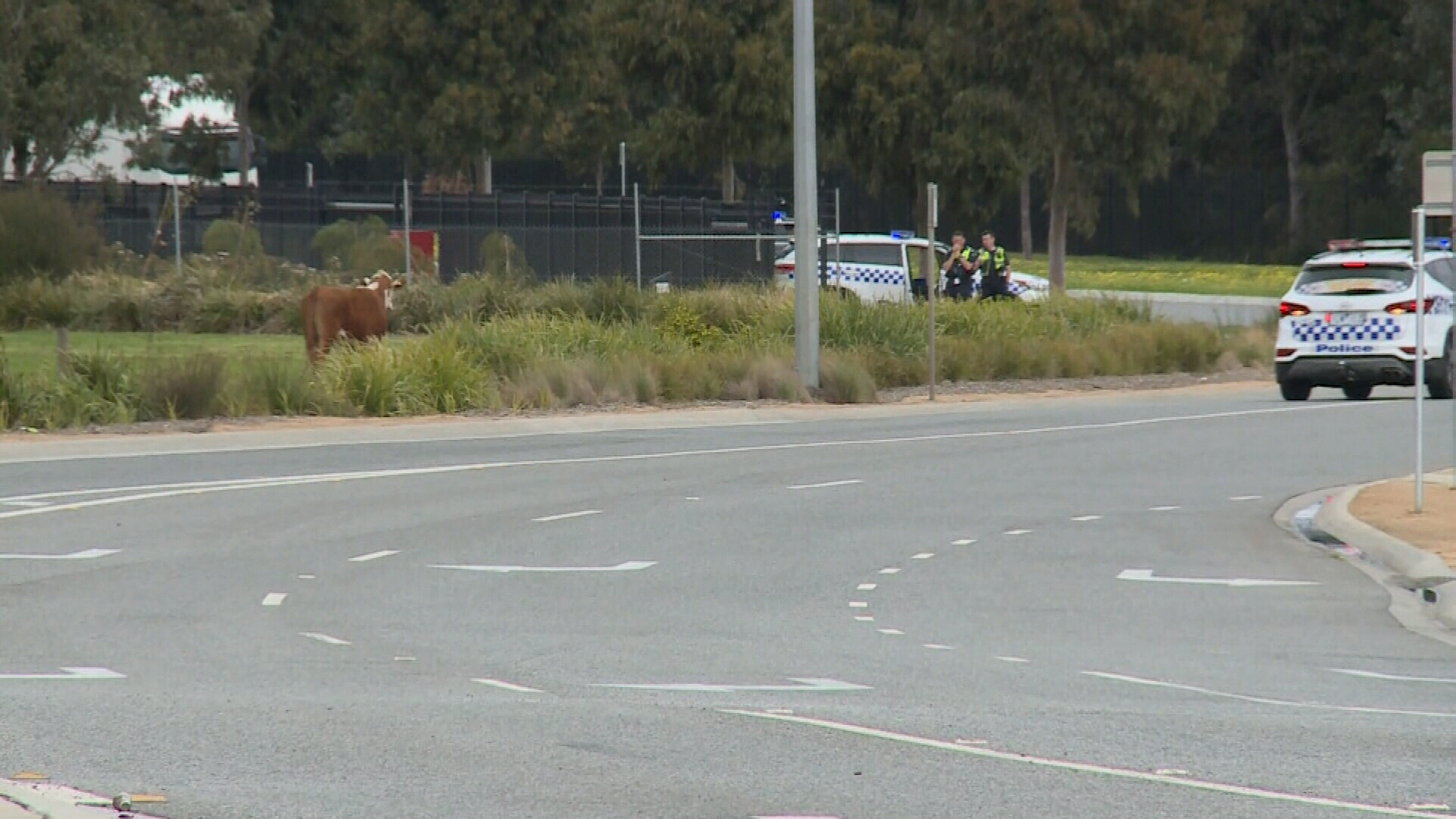 Cow shot in industrial area after escaping from Melbourne property