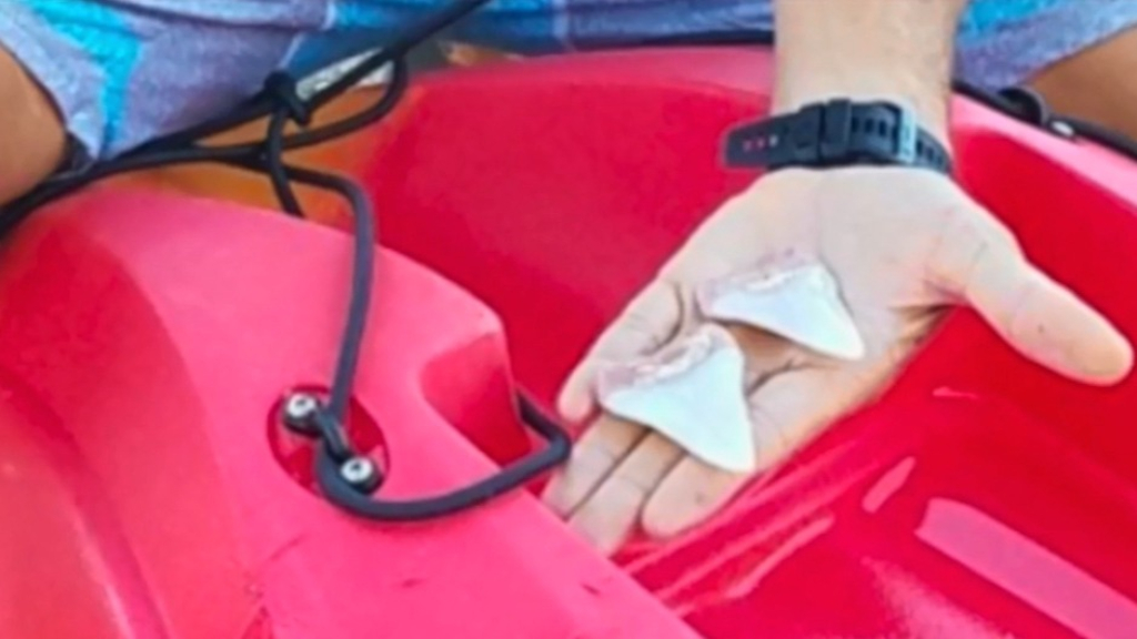Kayakers' close shave with great white leaves behind two massive teeth as proof