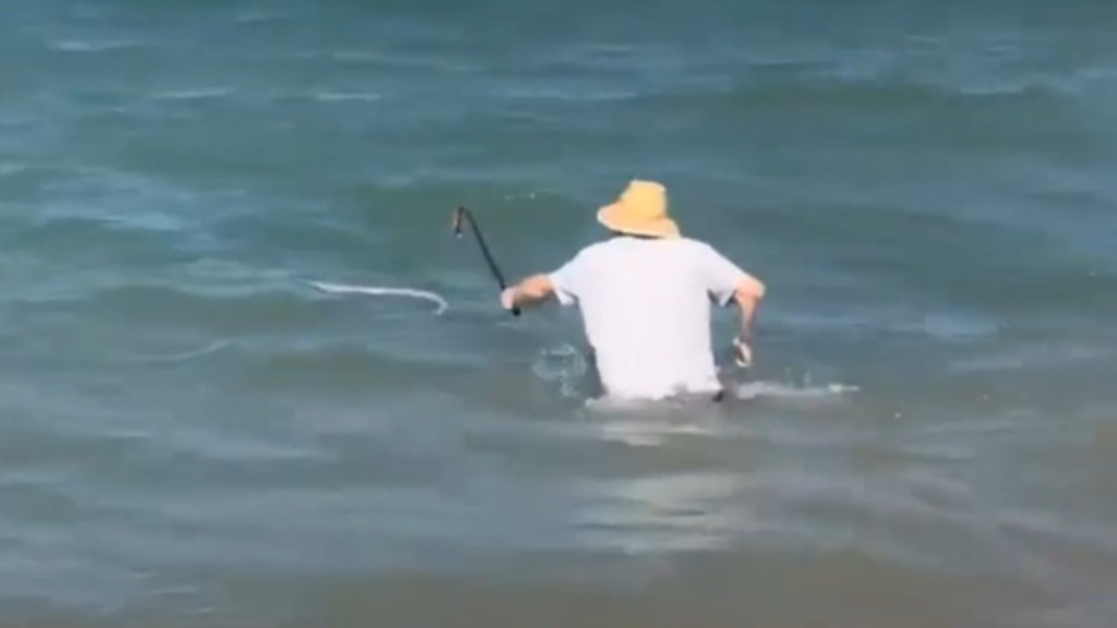 Man chases sea snake out to sea with walking stick