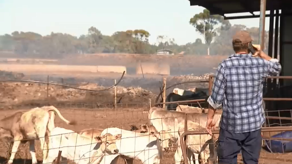 Victorian farmers regroup after grassfires