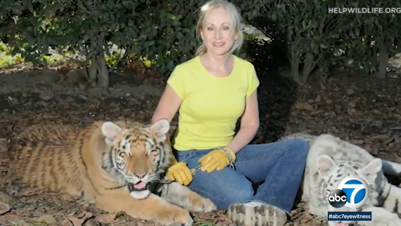 Conservationist attacked by two tigers at sanctuary