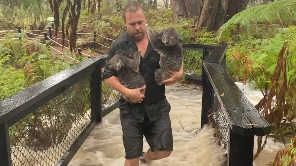 Animals Relocated At Aussie Zoo After Torrential Rain Caused Flash Flooding