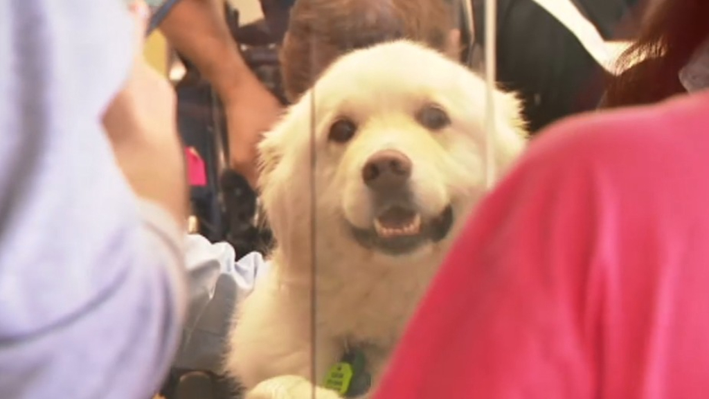 Dog reunites with owners after boarding train