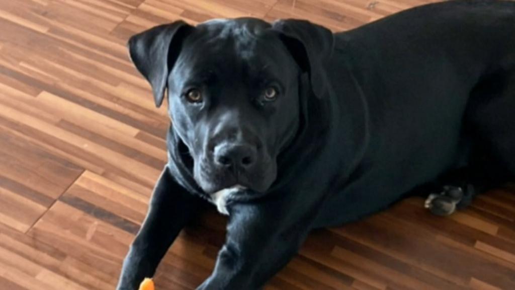 Woman's plea for stolen dog's return