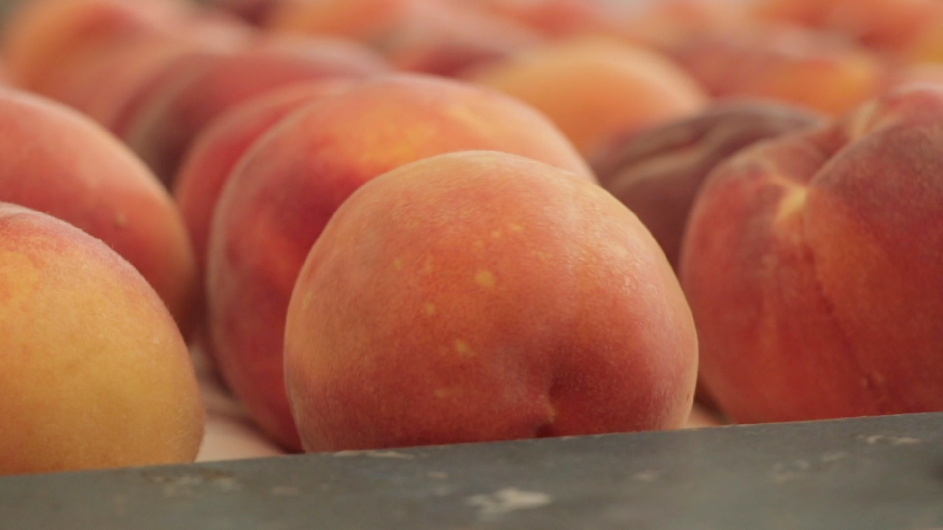 Ever wondered how to choose the best peach?