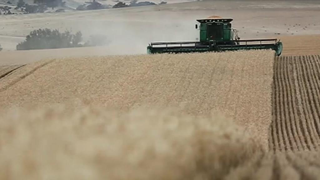 Coronavirus: China slaps barley tariffs on Australia