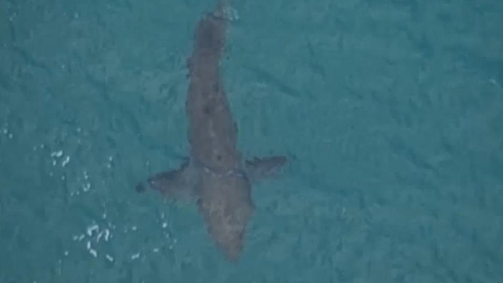 Three-metre shark kills surfer off Australia's east coast