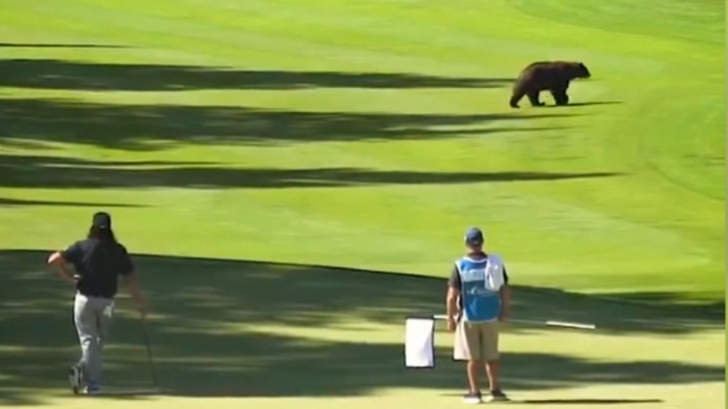 Bear crashes PGA Tour