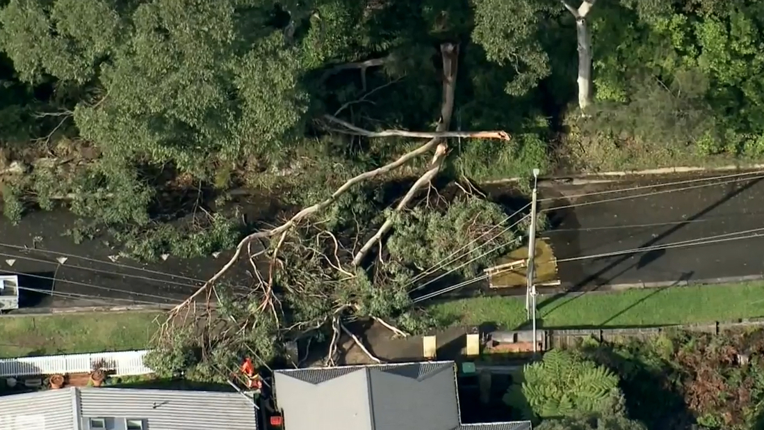 Wild weather causes extensive damage across Sydney