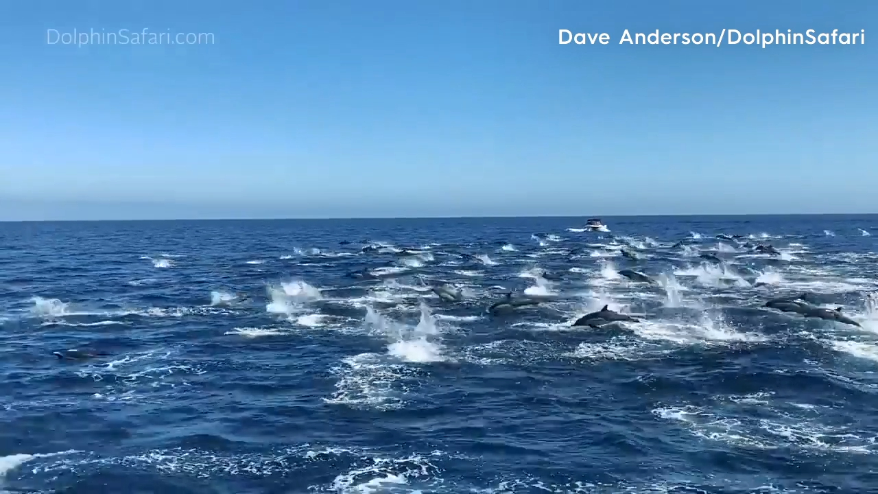 Incredible 'dolphin stampede' filmed in southern California