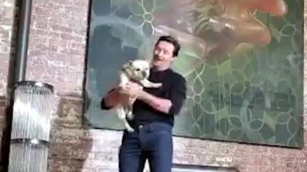 Hugh Jackman dances with his pet dog