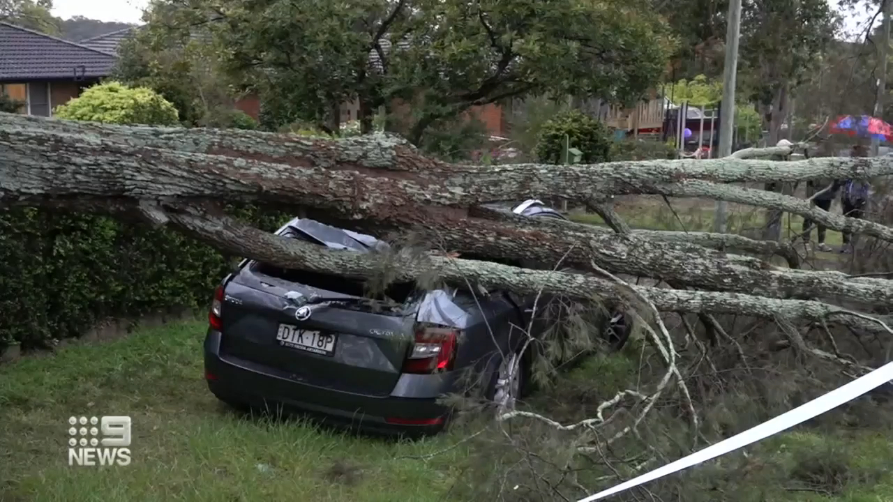 Sydney lashed by strongest winds in 15 years