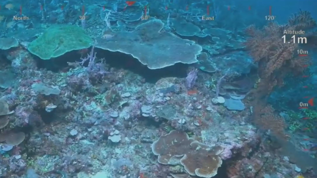 New section of Great Barrier Reef discovered by Australian scientists