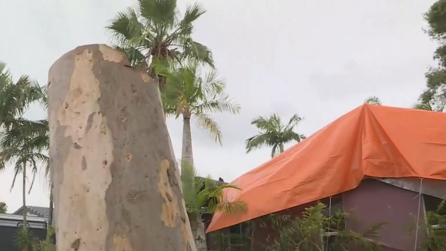 Monster clean-up after Sunshine Coast storm