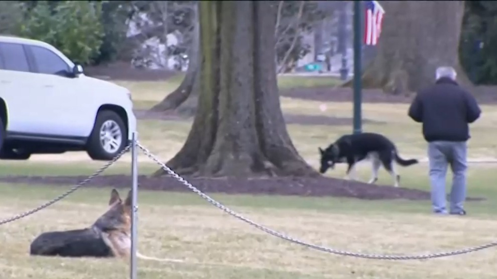 Biden's dogs bark loudly to announce their arrival at the White House