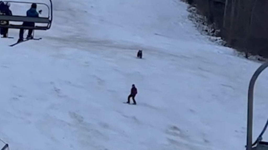 Bear chases skier down slope