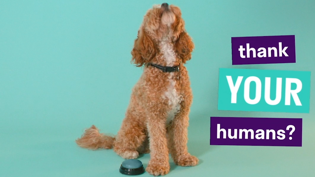 Deliveroo Treats let's pets place orders for their favourite human