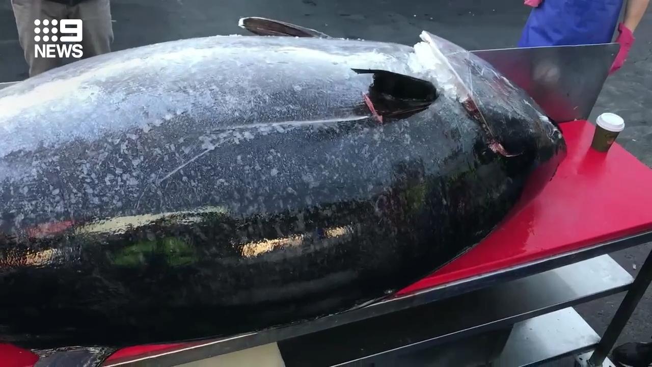 Giant 200kg tuna caught on NSW coast