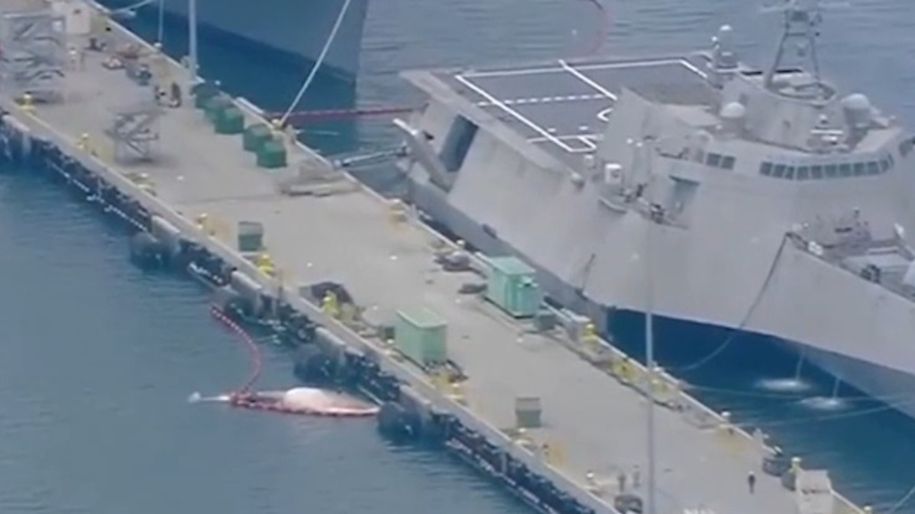 Two dead whales have been 'dislodged' from bottom of a Royal Australian Navy ship in the USA.