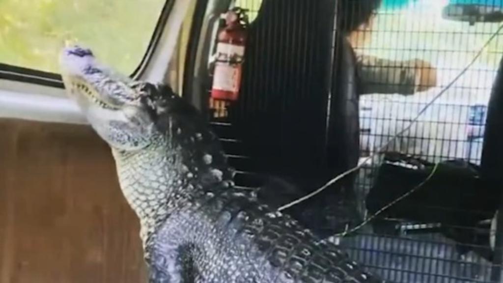 Robert Irwin shares video of alligator inside his car