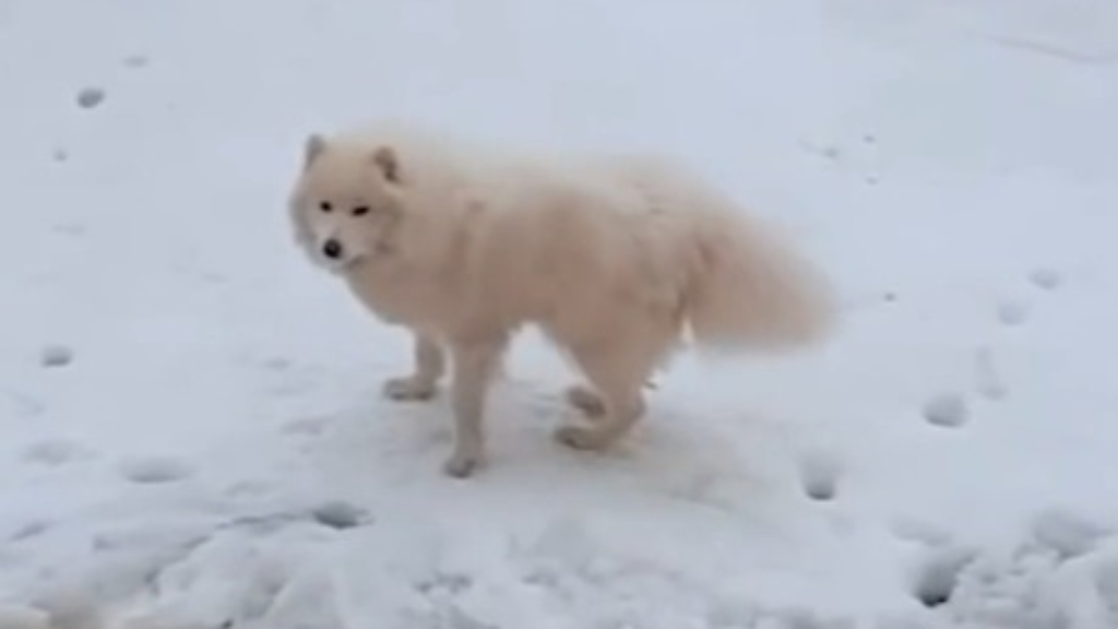 Dog found after getting lost in the Arctic