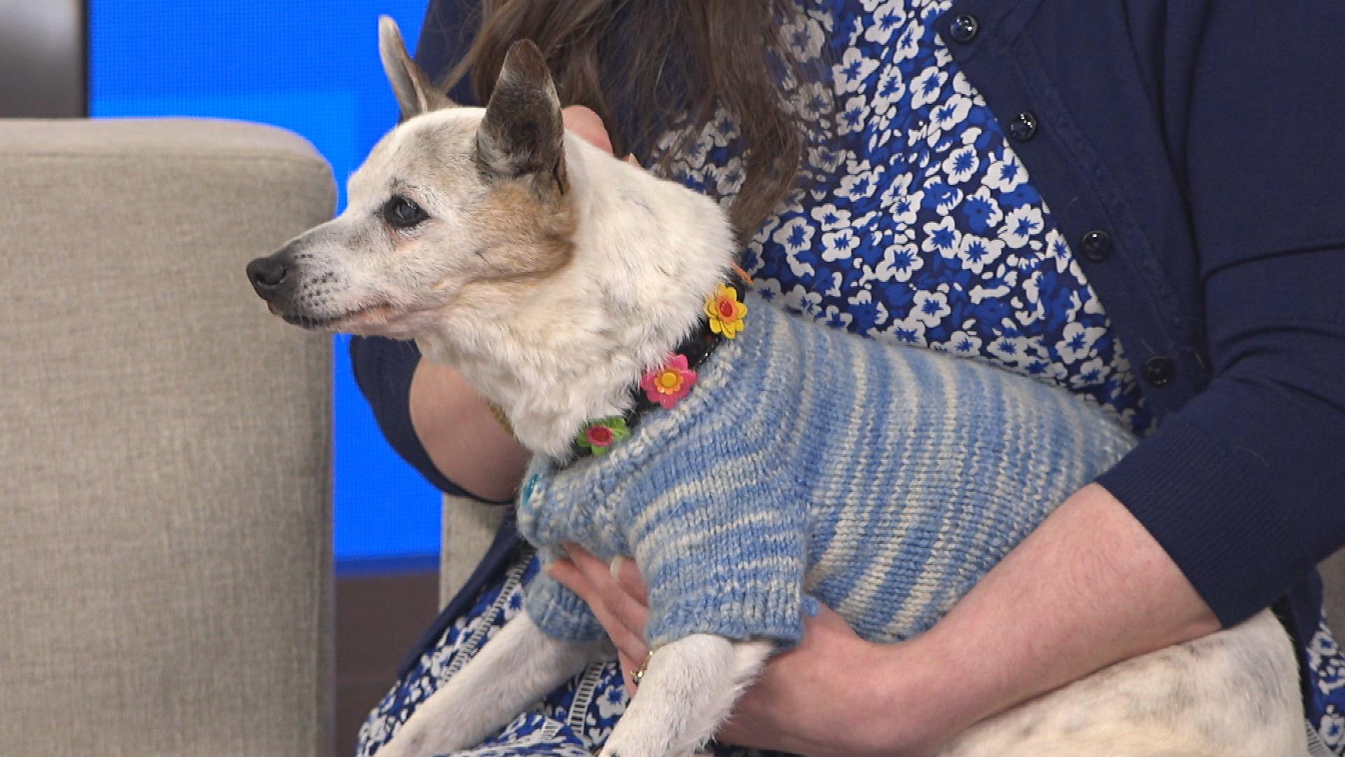 Meet Australia's Oldest Dog