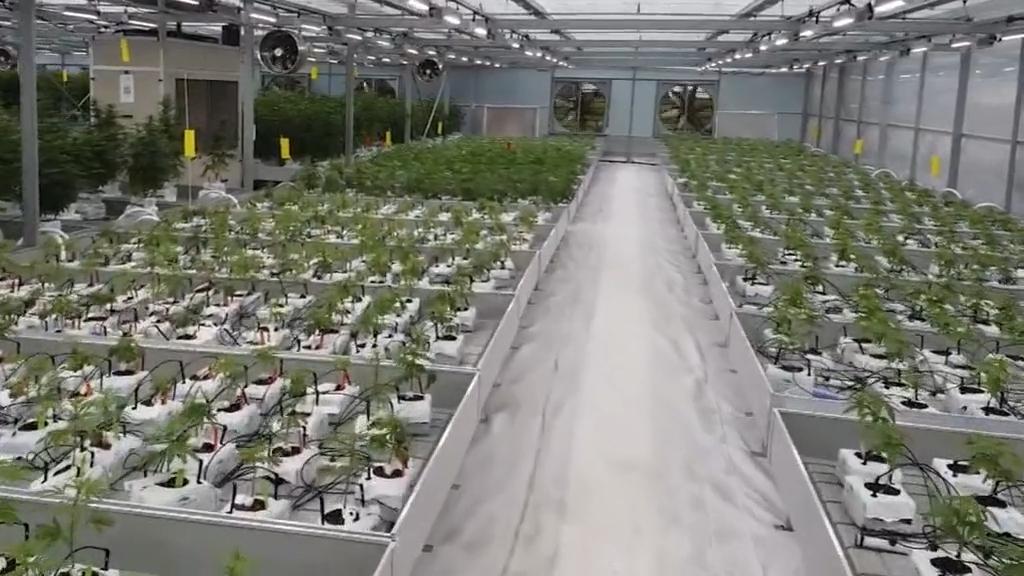 Construction to begin on medicinal cannabis farm in Queensland