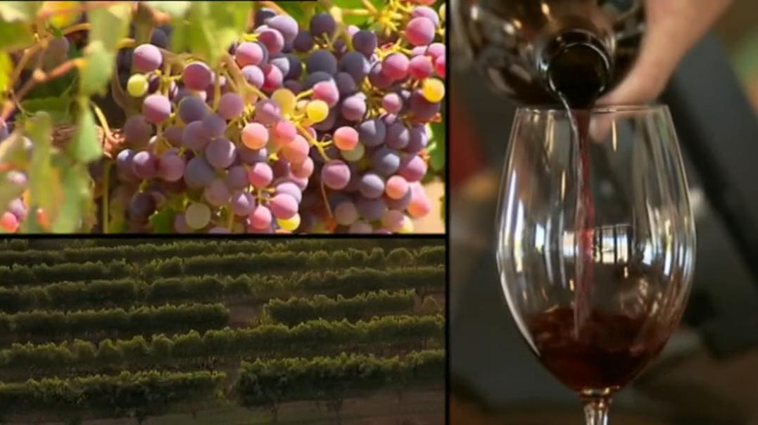 Australia takes China to trade watchdog over wine tariffs