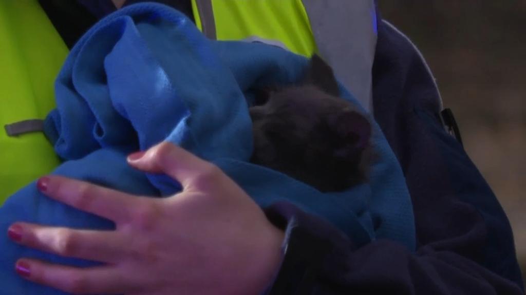 Kitten rescued from Villawood unit fire