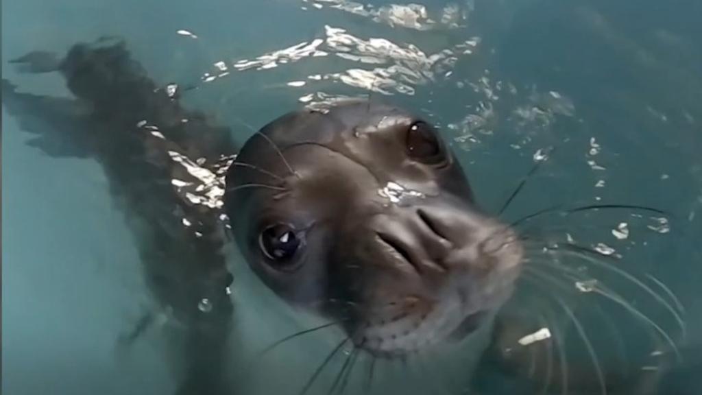 Rare Greek seal Kosti killed by spear gun