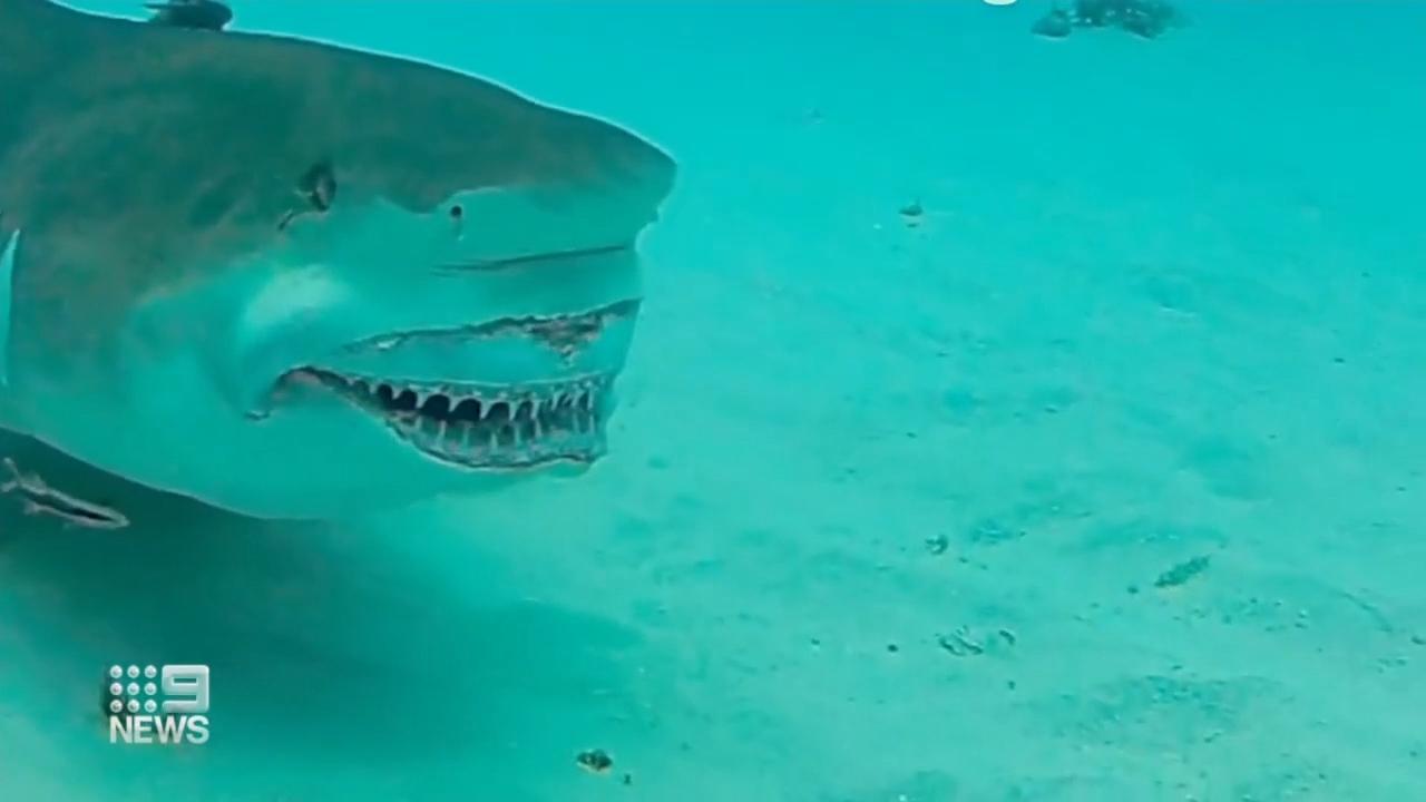 Man seriously injured after shark bite in Western Australia
