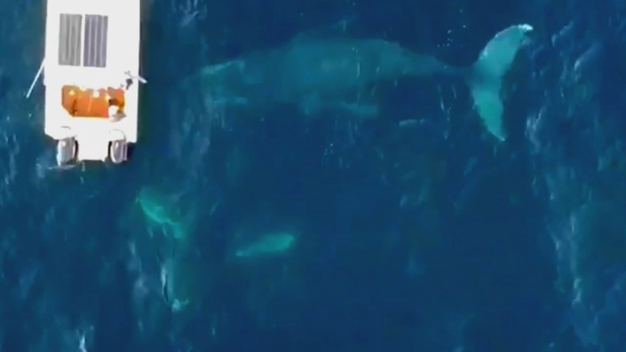 Father and son film whale encounter