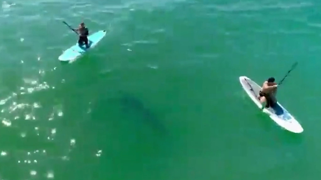 Orlando Bloom paddleboards with shark